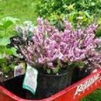 Fairbanks Garden Club Plant Sale