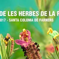 Mercat de les Herbes de la Ratafia