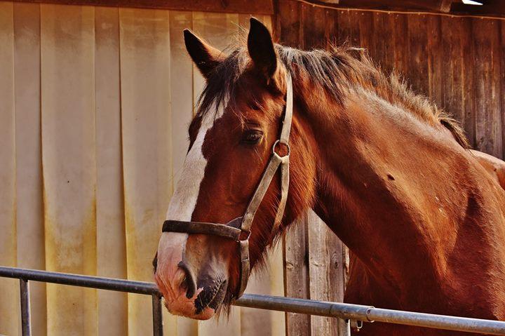 Applied Zoopharmacognosy Equine Gateway Workshop