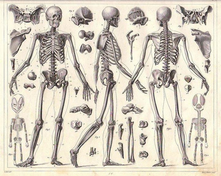Application of Anatomy for Yoga with Jason Back at My Hot Yoga ...