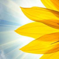 Mediumship and Healing Workshop
