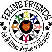 Feline Friends of Olympia WA