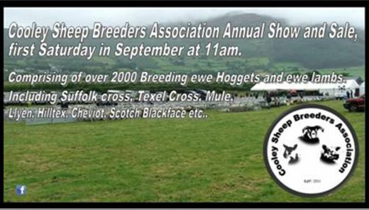 Cooley Sheep Breeders Association Annual Show And Sale    Drogheda
