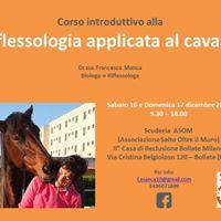 Workshop di riflessologia applicata al cavallo