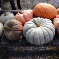 Halloween Festival on the Farm