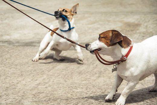 Impulse Control for Dog Sport