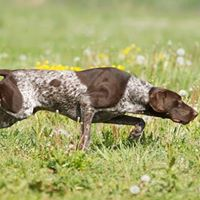 Basic Canine Anatomy Seminar With Julie Harris LCGI NCGIA