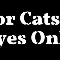 For Cats Eyes Only reading and crafts with author Olli Tooley