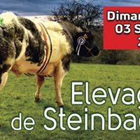 Cmj finale provinciale de la Fja Houffalize-Vielsalm