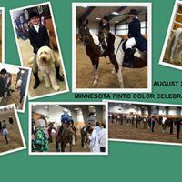 Minnesota Pinto Color Celebration Show