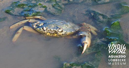 berleben im Watt - Tiere der Nordsee