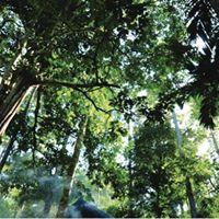World Forests Seminar