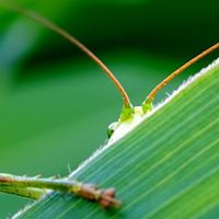 Concert of Katydids and Crickets - Limited Space