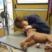 Canine First Aid - One Space Left