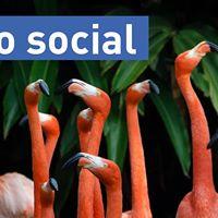 Solo Social An introvert friendly event (SFU Surrey)