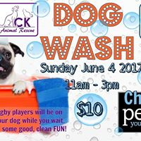 Dog Wash with Kent Havoc Rugby Club