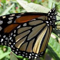 Monarchs and More