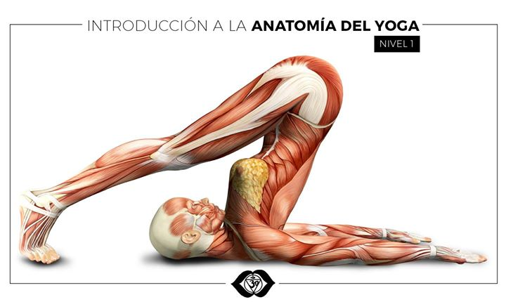 Taller: Anatomía del Hatha Yoga at Centro de Yoga Sivananda Viña del ...