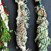 Plantas Cura e Conscincia