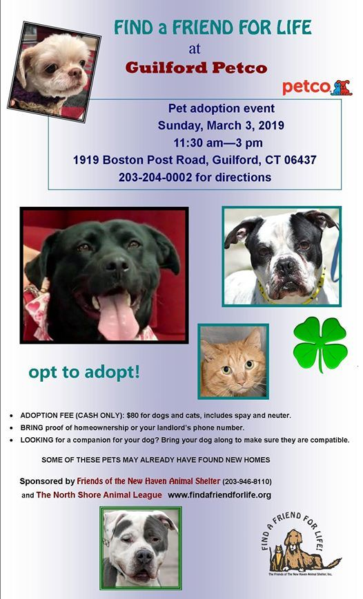 Friends of the New Haven Animal Shelter Adoption Event at