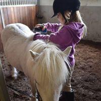 Nybegynnerdag med hest