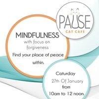 Cat Mindfulness - Forgiveness