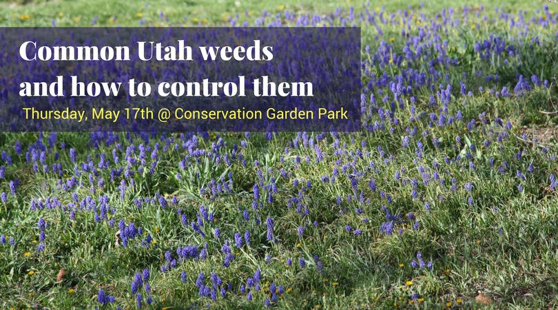 Common Utah Weeds & How To Control Them at Conservation Garden Park ...