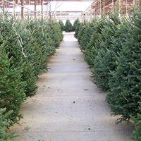 Downtown Market Christmas Tree &amp Decor Lot