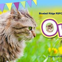 Bluebell Ridge Open Day