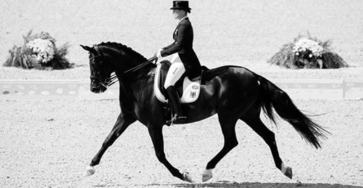 Dressage League Round 3 (FINAL)