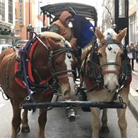Weekend Carriage Rides at Macys Celebration Station