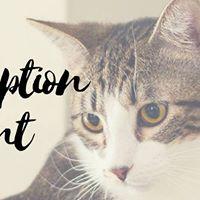 Dog &amp Cat Adoption Event Lakeside DFW