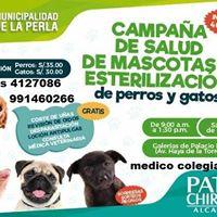 Campaa de esterelizacion y salud de gatitos y perros