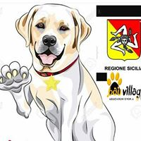 Labradors DAY MADE IN Sicily