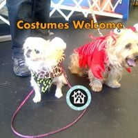 Mutt-i-grees Dog Safety Costumes Welcome