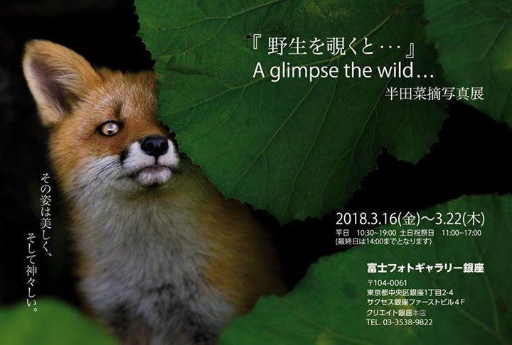 A glimpse the wild...