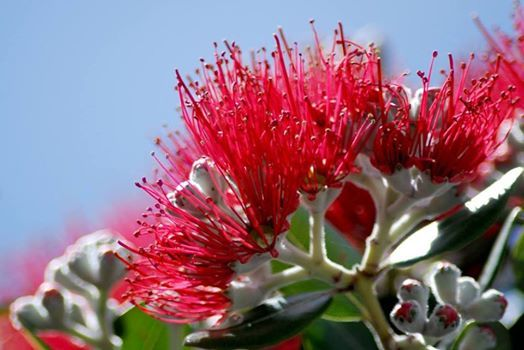 The Sacred Tree Spiritual & Psychic Fair Auckland