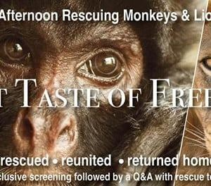 Join us for an afternoon rescuing monkeys and lions