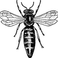 Shamanic Bee Healing Centre