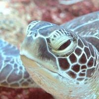 Purple Turtle Diving Social Evening