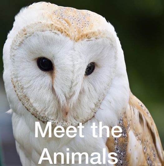 Meet the Animals here at Bounce Monday 15th April half term