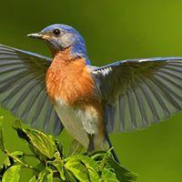 Bird Walk at Kankakee National Wildlife Refuge