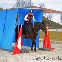 Horse Agility im Sattel  Grundkurs