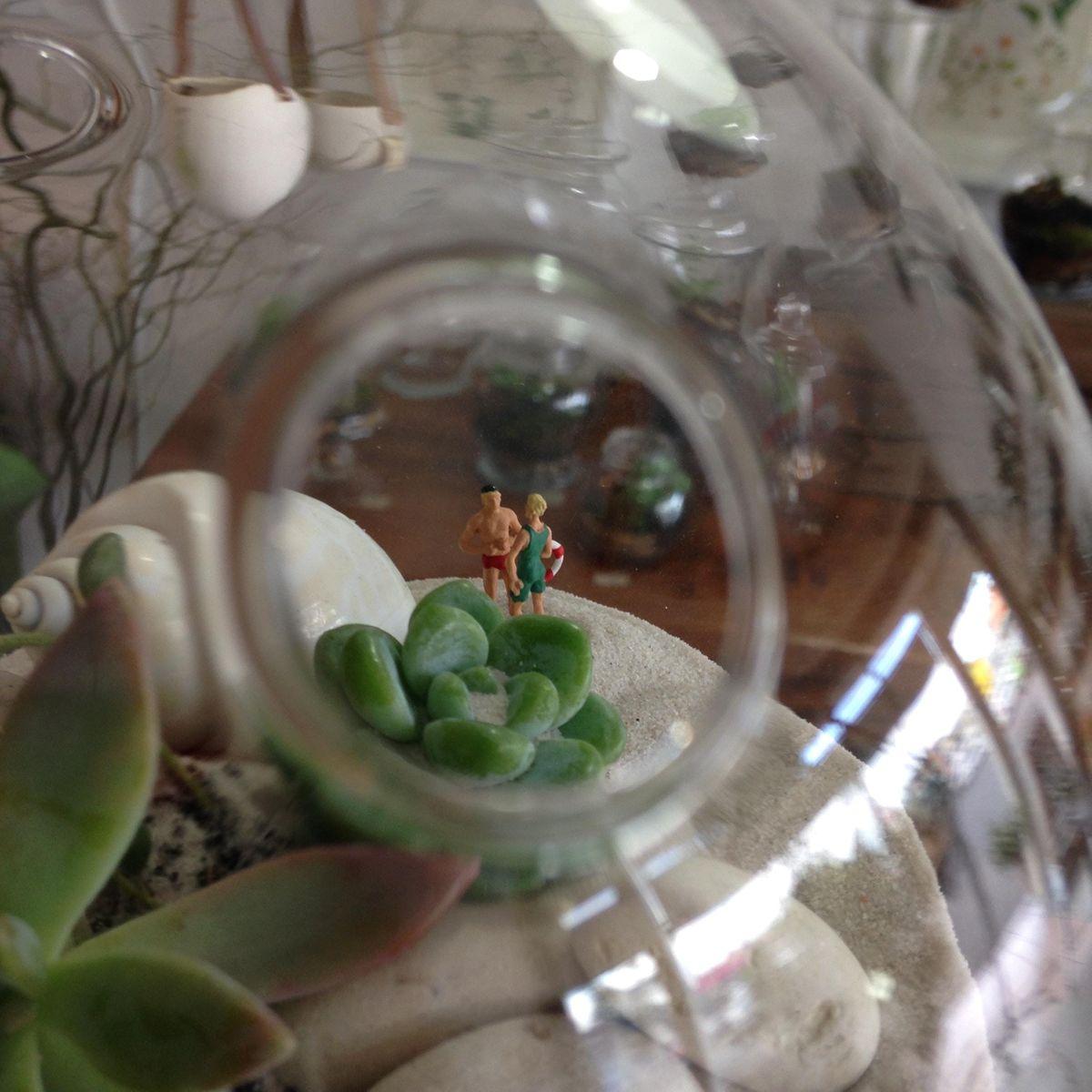 Desert (Succulent) Terrarium Workshop