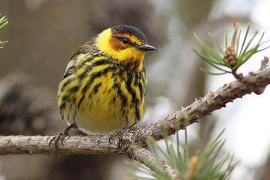 Birding Across Michigan