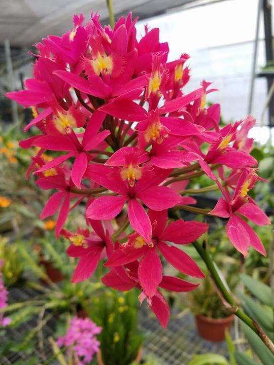 Topeka Flower, Lawn U0026 Garden Show
