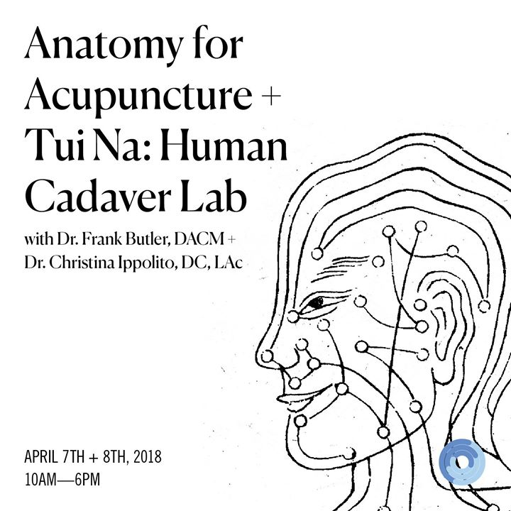 Anatomy for Acupuncture and Tui Na: Human Cadaver Lab at Seneca ...