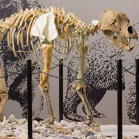 Museo di Archeologia e Paleontologia Carlo Conti