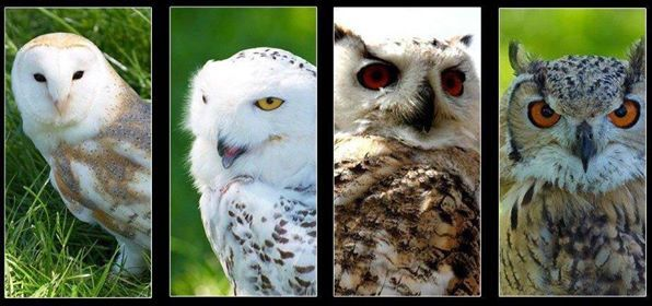 Owl Magic - Come and Meet the Owls