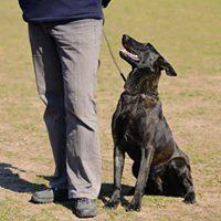 Dog Training Advanced